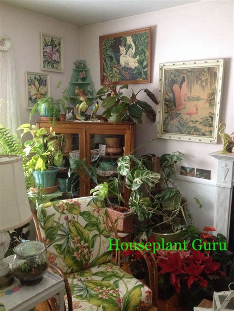 keep out of room indoor corner of my living room houseplants houseplants this and houseplant