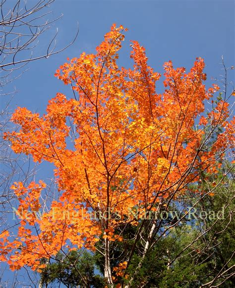 pictures of fall in spring almost new england s narrow road
