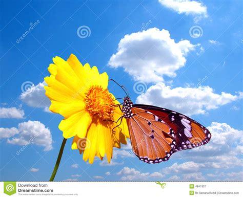 fiore con la s farfalla sul fiore con il cielo nuvoloso fotografia stock