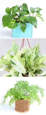 easy plants 12 easy indoor plants for clean air a of rainbow