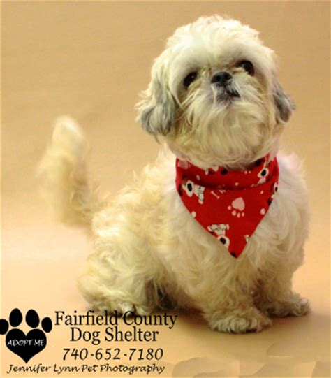 adopt a puppy ohio fairfield county shelter and adoption center lancaster ohio