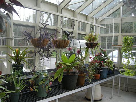 sanitizing  greenhouse  overwinter plants garden