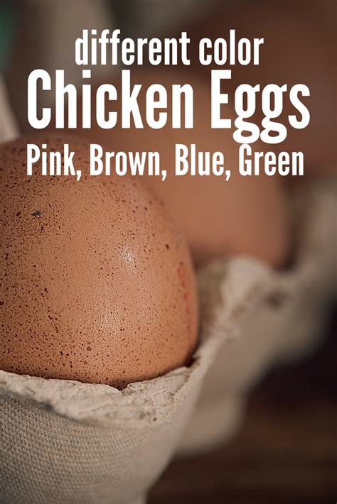 chicken egg colors different color chicken eggs pink blue green brown