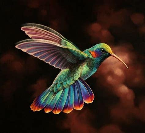 colorful hummingbirds gorgeous colors on this hummingbird birds birds