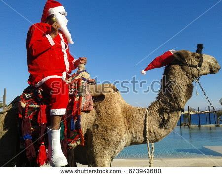 christmas camels joyful camel stock images royalty free images vectors