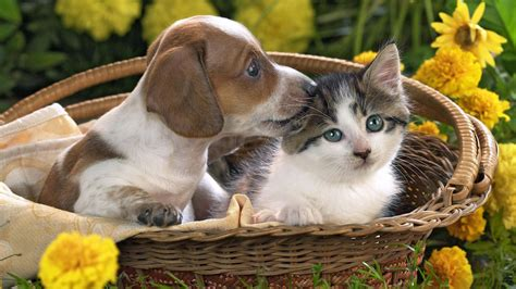 animal puppy animals pictures images graphics and comments