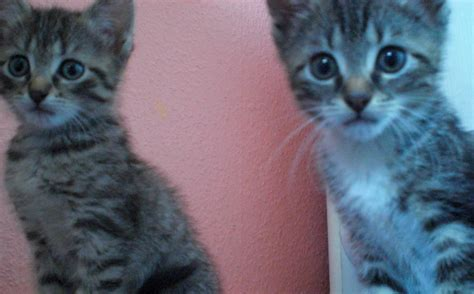 katzenbabys suchen ein zuhause katzen tieranzeigen seite 186
