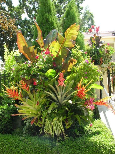 tropical backyard plants tropical plants gardening ideas pinterest
