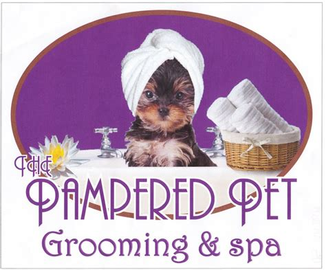 cheap grooming near me pin pet groomers near me on