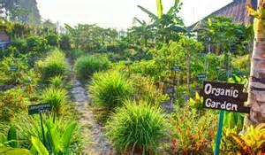 d 233 buter un jardin potager en permaculture