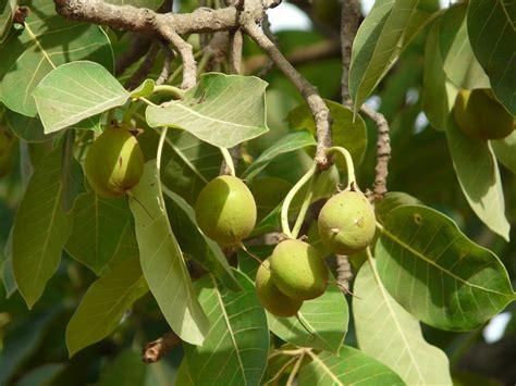 bird attractive trees  india  grow   home