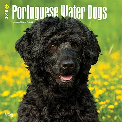 portuguese water price browntrout portuguese water dogs 2018 12 x 12 inch monthly square wall calendar