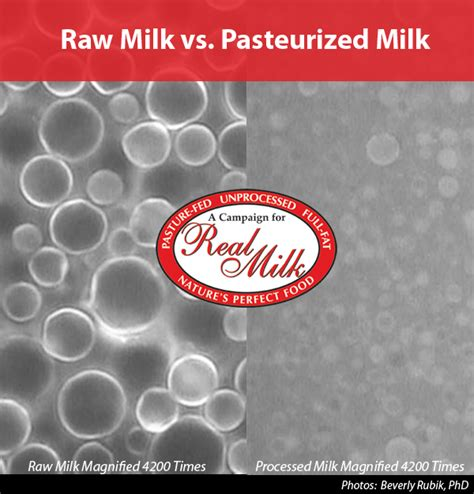 Chinese Armchair Raw Milk Vs Pasteurized Milk A Campaign For Real Milka
