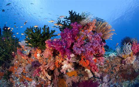 raja ampat underwater coral reefs  beautiful colors
