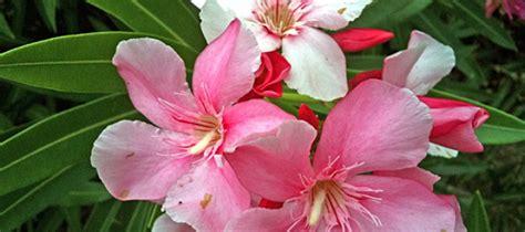 poisonous garden flowers poisonous garden flowers fuad informasi dikongsi bersama