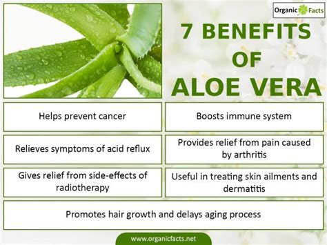 aloe vera plant facts 21 surprising benefits of aloe vera organic facts
