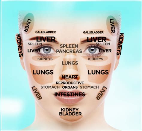 face mapping on pinterest estheticians facial massage chinese facial reading chart could your face reveal the