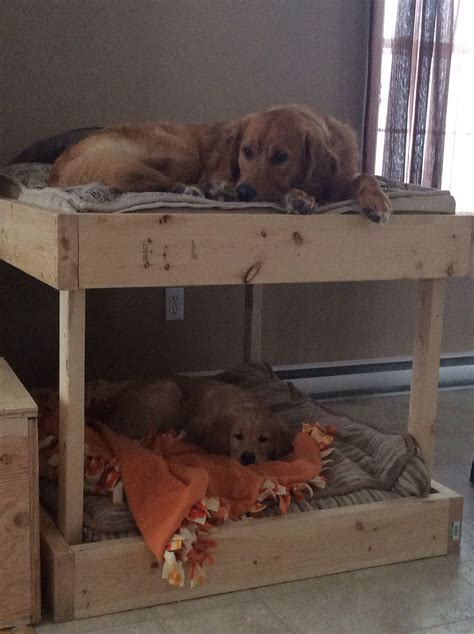 Bunk Bed For Dogs Easy Diy Pet Bunk Beds Dogs Pinterest Bunk Bed Easy