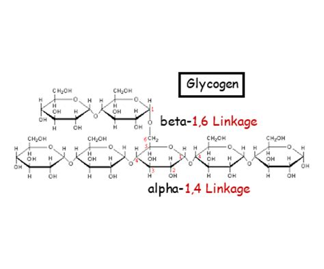 impact of the supramolecular structure of cellulose on the carbohydrates and lipids