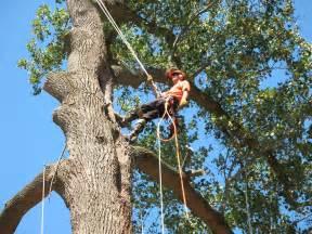 Tree Service In Pagodin S Tree Removal Service Providing The Best Tree
