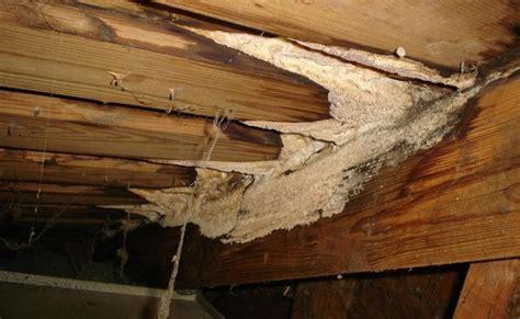 mold inspections in brooklyn manhattan queens long