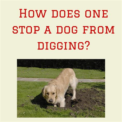 how to get puppy to stop how to get dogs to stop in the house 28 images why is my puppy barking and how do