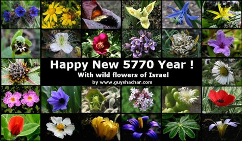 how to say happy new year in hebrew happy new year in hebrew