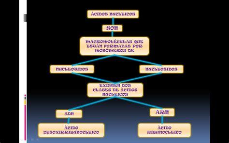 trascender los niveles de 8494484796 biologia entrada 5 trascender a un concepto a un tema relacionado y su visualizaci 210 n gr 193 fica