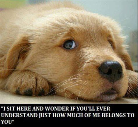 a s purpose quotes a dogs purpose quotes quotesgram