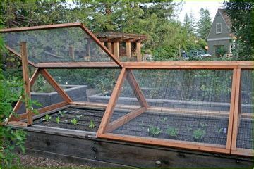 squirrel proof gardens images  pinterest red