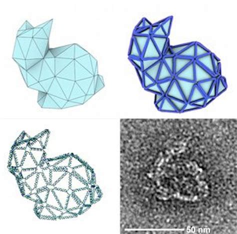 Origami Biology - folding tiny origami bunnies out of dna and why it s important