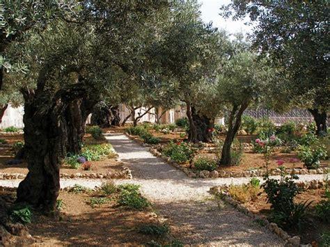 In The Garden Of Gethsemane by File Gethsemane Neat Paths Between The Olive Trees Jpg