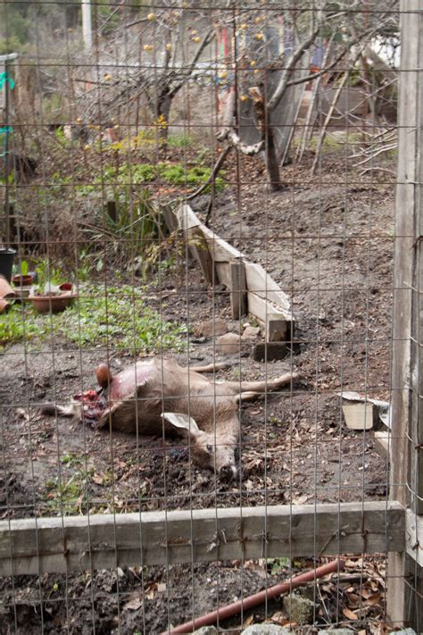 burying animals in backyard bury animals in backyard 28 images bury animals in