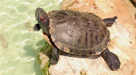 imagenes de animales lentos qu 233 es lento 187 definici 243 n y concepto