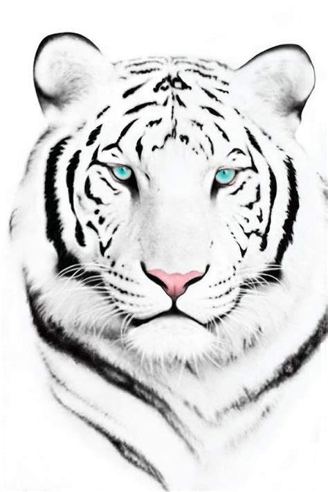 white tiger tattoos best 20 tiger drawing ideas on tiger drawing