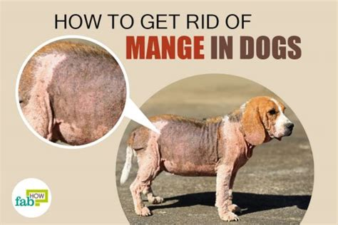 how to get rid of worms in puppies naturally how to remove a tick from a fab how