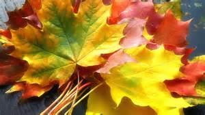 fall leaf colors fall 101 color company