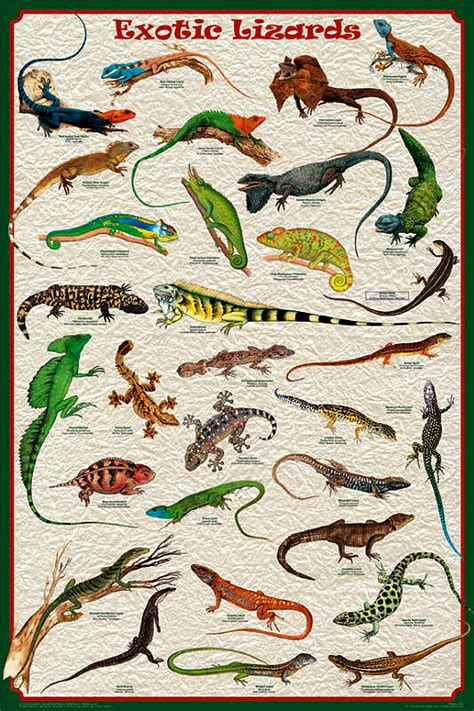 exotic lizards poster