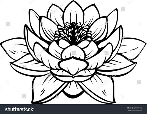 Lotus Black And White Outline by Black Silhouette Outline Lotus Nelumbo Isolated Stock Vector 249005740