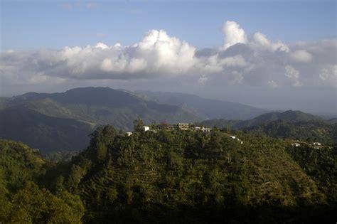 cottages blue mountain jamaican blue mountain cottages lime tree farm