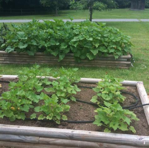 Organic Compost For Vegetable Garden Vegetable Garden Organic Soil For Vegetable Garden