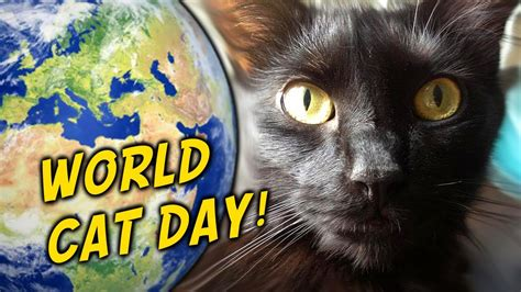 world cat today is world cat day cat daily news