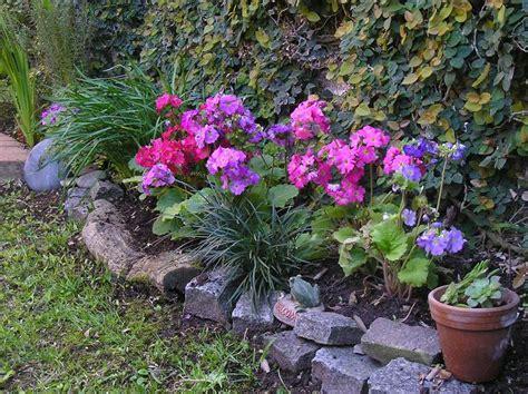 imagenes de jardines de sombra fotos de jardines y plantas de sombra infojardin ask