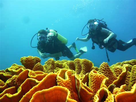 dive in aqaba diving aqaba aqaba international dive center