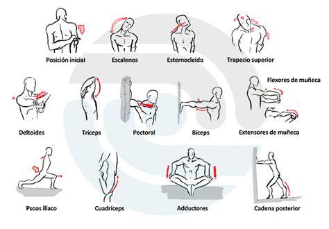 estiramientos de cadenas musculares gomariz pdf fisioter 224 pia