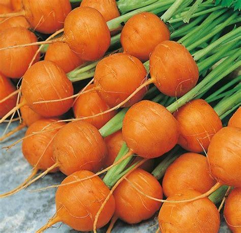 Wortel Segar Kemasan Kardus benih wortel market 100 biji non retail bibitbunga