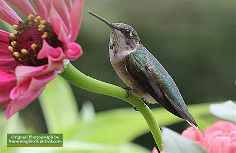 2018 hummingbird festivals and events calendar list in the