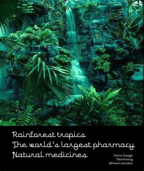 sle of haiku rainforest tropics haiku 11 15 14 nature poems