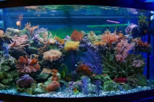 Show Homes Interiors 28 modern fish tanks that inspire relaxation