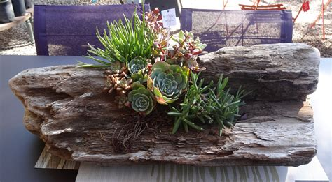 Succulent Planters For Sale | garden gift diy succulents in a driftwood planter tended